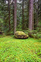 oregon, united states of america, the forest floor in mount hood national forest