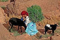 MOROCCAN SHEPHERD IN THE ATLAS MOUNTAINS, MOROCCO, AFRICA