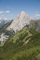 mountain with alpine meadow and forest, alberta, canada