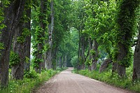 Latvia, Western Latvia, Kurzeme Region, Sabile, country road