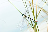 Artificial dragonfly on tall grass