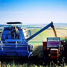 Combine harvester in wheat field Alsace France
