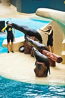 Sea lion show  Loro Parque  Puerto de la Cruz  Tenerife  Canary Islands  Spain.