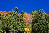 Trees on Mt. Hakusan in Autumn, Ishikawa Prefecture, Honshu, Japan