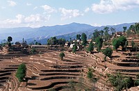Nepal, Nagarkot, terraced field                                                                                                                       ...