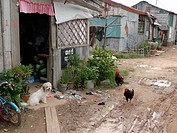 CAMBODIA. The settlement slum of San Sok, 10 kilometres outside Phnom Penh  Many people here were forcibly evicted from a slum in central Phnom Penh w...