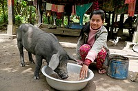 CAMBODIA. Woman feeding pig, Ban Bung village, Stung Treng district