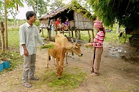 CAMBODIA. Sin Vorn 32 and his wife Lib Khan 23 owners of two cows and beneficiaries of DPA animal husbandry project, Ban Bung village, Stung Treng dis...