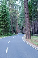 Road in Yosemite National Park, California, USA