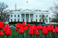 Tulip Garden, White House