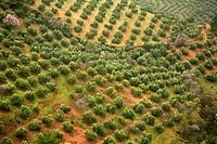 Olive groves, Sierra de Cazorla, Jaen province, Andalusia, Spain
