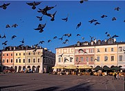 Pigeons at Main Market Square in picturesque Zamosc member of UNESCO, Poland
