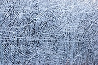 Winter in Sweden, snow on trees in forest and knitted iron wire fence , Sweden