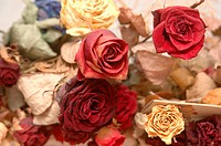 Bunch of Red, Pink, White and Yellow rose flower