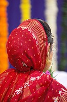 South Asian Indian head covered bride in Hindu marriage ceremony , Bombay Mumbai , Maharashtra , India