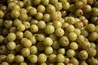 Amla , Indian Gooseberry, Latin name Emblica officinalis Loca, Herbal Medicinal Fruit , Indiarry, Amla, Amlaki Latin name