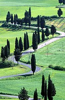 Italy, Tuscany. Narrow road near Montichiello