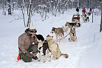Dogsledge in Lapland, Finland