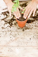 Girl planting seedling in ceramic flower pot