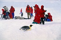 Antarctica, Queen Maud Land, Antarctic ice shelf, Tourists