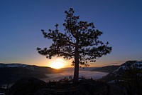 A silhouette of a tree at sunrise at Donner Lake in California.