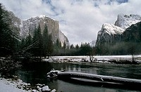 River flowing through a forest, El Capitan, Merced River, Yosemite National Park, California, USA