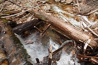 Mad River Drainage Logging Era - Remnants of an splash dam made of logs along Flume Brook near the old Camp 5 site in Waterville, New Hampshire USA  S...