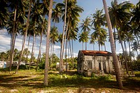 Palmtrees in the village of Muine, coast of Vietnam