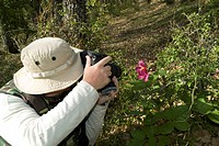 Photographing a pink peony
