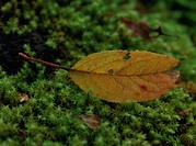 Close_up of yellow leaf