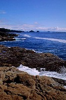 CANADA, BRITISH COLUMBIA, VANCOUVER ISLAND, UCLUELET, LANDSCAPE AT AMPHITRITE POINT AT LOW TIDE, MUSSELS ON ROCKS