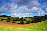 England, Dorset, Broadwindsor. An arable field nestles between green rolling hills in the heart of Dorset.