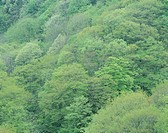 Forest on Hill, Nagano, Japan