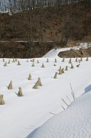 Field With Snow, Nagano, Japan