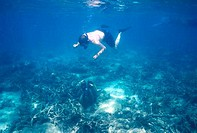AUSTRALIA, QUEENSLAND, GREAT BARRIER REEF, LIZARD ISLAND, REEF, GIANT CLAM, SNORKELER