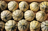 Lots of Charentais melons close_up