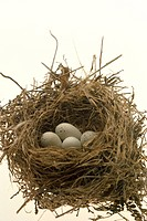 Still life of bird's nest
