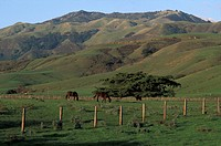 Usa, California, Big Sure, countryside, horses in farm