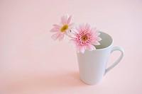 Gerbera daisy in a Mug