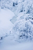 Snowy winter landscape detail