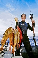 spearfisherman with good catches of red groupers, Epinephelus morio, and hogfish, Lachnolaimus maximus, off Tampa, Florida, USA, Gulf of Mexico, Carib...