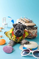 Miniature Schnauzer Puppy and Summer Vacation