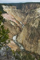 The Grand Canyon of the Yellowstone River in Yellowstone National Park Wyoming.