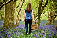 A young woman walking through the woods, holding a picnic basket