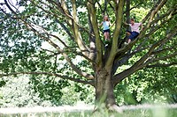 A young boy and girl climbing a tree