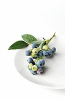 Stem of blueberries on plate