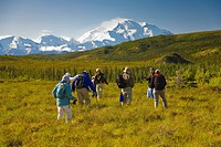 Group of hikers on tundra below the northside of Mt. McKinley on a sunny day, Denali National Park, Interior Alaska, Summer/n