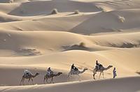 Africa, Morocco, Maghreb, North Africa, sand dunes, erg Chebbi, desert, dunes, Sahara, sand, nature, camel, dromedary, trekking, scenery