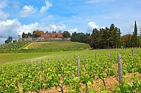 Chianti, Castello di Brolio, Brolio Castle, Ricasoli Vineyard, Siena Province, Tuscany, Italy.