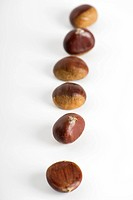Chestnuts lined up